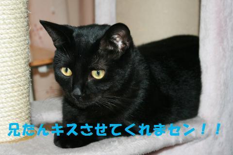 022_convert_20100919213659.jpg