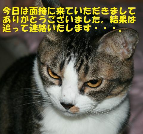 022_convert_20101028162058.jpg