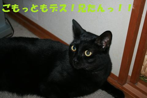 022_convert_20101202173759.jpg