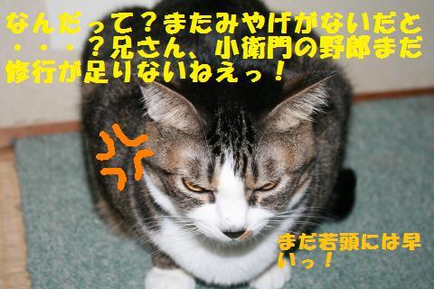 022_convert_20101210222247.jpg