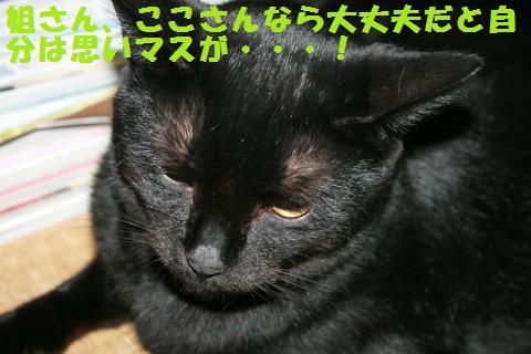 022_convert_20101212164225.jpg