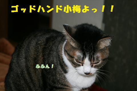 022_convert_20110310202233.jpg