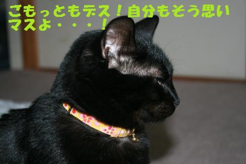 022_convert_20110323224635.jpg
