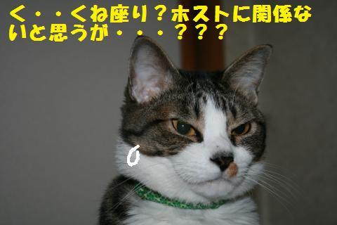 022_convert_20110417210542.jpg