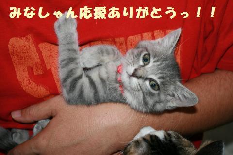 022_convert_20111127000335.jpg