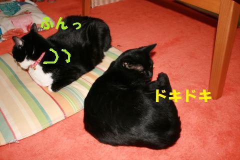023_convert_20100127233910.jpg
