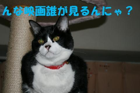 023_convert_20100205225906.jpg