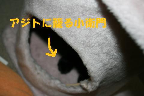023_convert_20100207224855.jpg