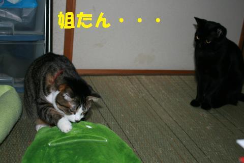 023_convert_20100214205753.jpg