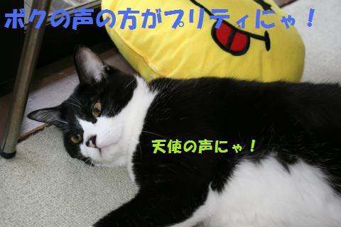 023_convert_20100613170746.jpg