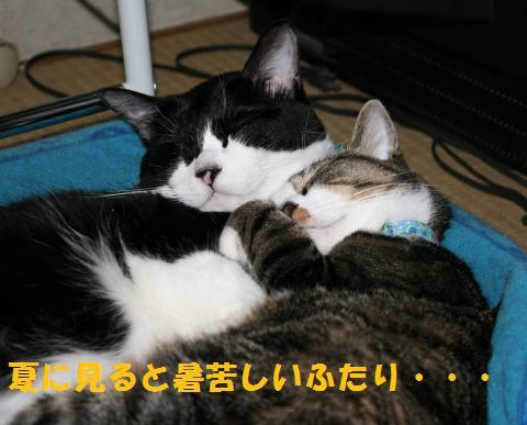 023_convert_20100711003207.jpg