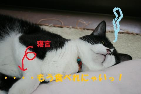023_convert_20100919213824.jpg