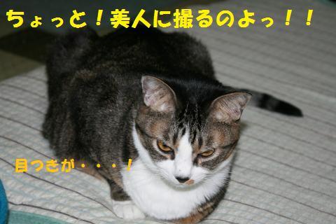 023_convert_20101016232630.jpg