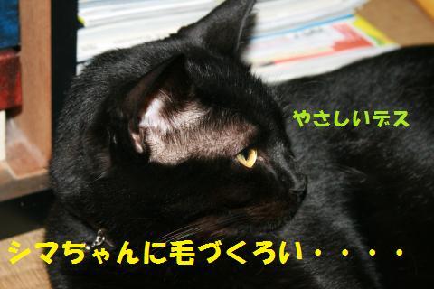 023_convert_20101026195715.jpg