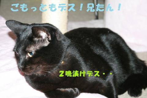 023_convert_20101209212843.jpg