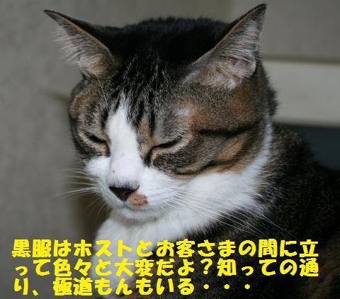 023_convert_20101212163916.jpg