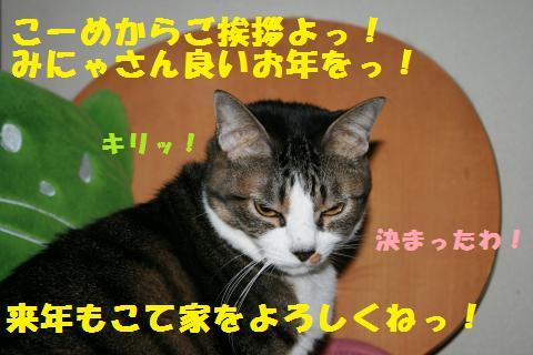 023_convert_20101231151940.jpg