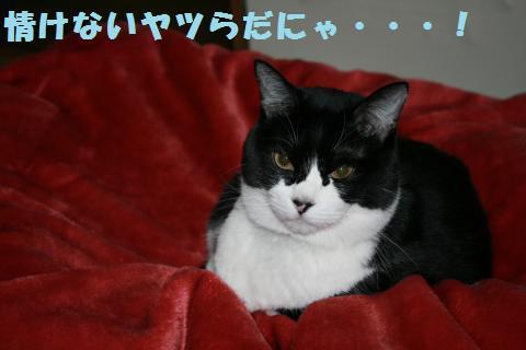 023_convert_20110202200952.jpg