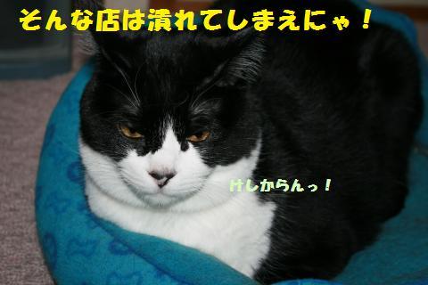 023_convert_20110411233022.jpg
