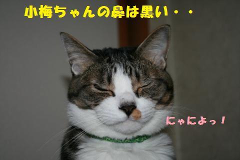 023_convert_20110419204819.jpg