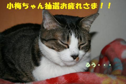 023_convert_20110517205135.jpg