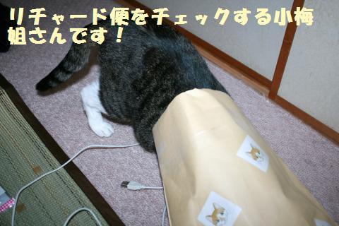 023_convert_20110807155115.jpg