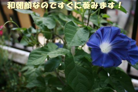 023_convert_20110818152901.jpg