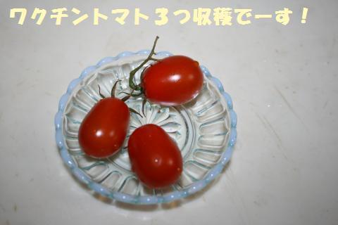 023_convert_20110907203746.jpg