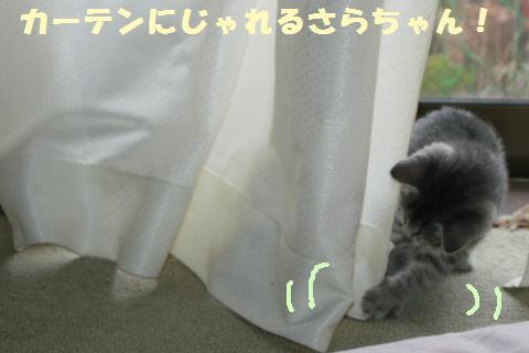 023_convert_20111031121337.jpg