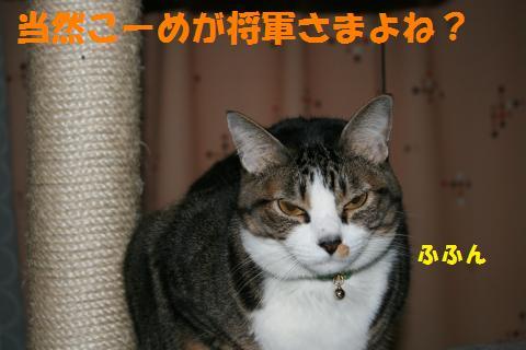 024_convert_20100205230039.jpg