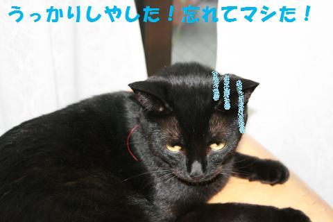 024_convert_20100807134559.jpg