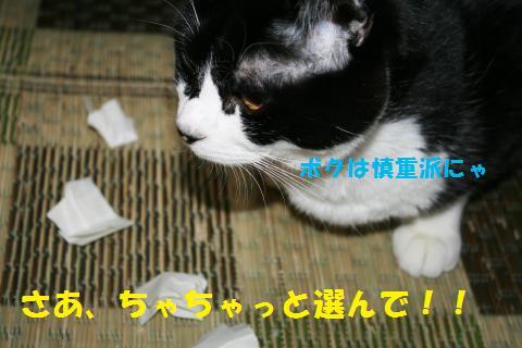 024_convert_20101110192559.jpg
