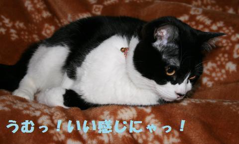 024_convert_20110306181640.jpg