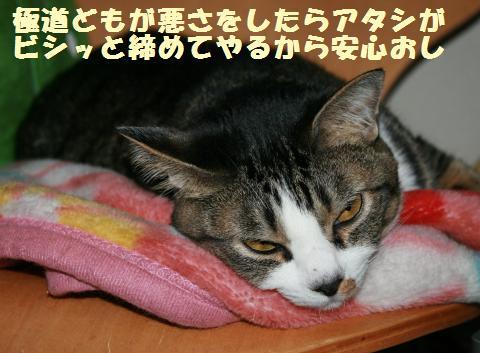 024_convert_20110521233907.jpg