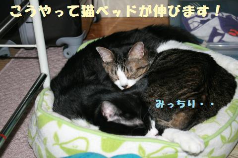 024_convert_20111107225346.jpg