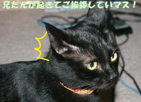 024_convert_20120104215015.jpg