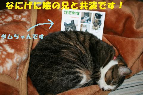 025_convert_20110101151338.jpg