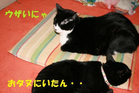 026_convert_20100127234043.jpg