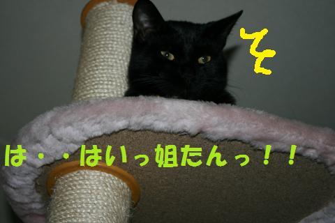 026_convert_20100211222615.jpg