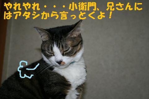 026_convert_20100820230550.jpg