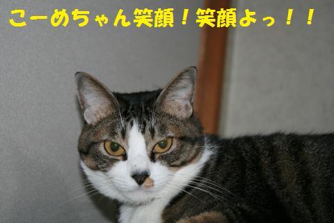 026_convert_20101018171610.jpg
