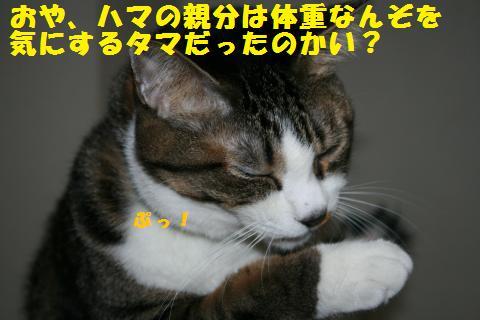 026_convert_20110228231813.jpg