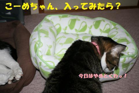 026_convert_20110430232009.jpg