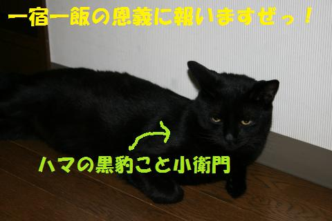 027_convert_20100705230313.jpg