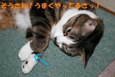 027_convert_20100719204851.jpg