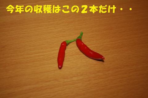 027_convert_20100811210233.jpg