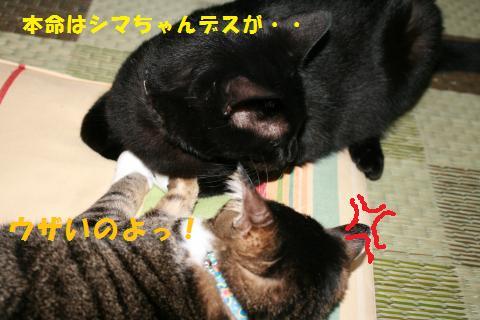 027_convert_20100818205251.jpg
