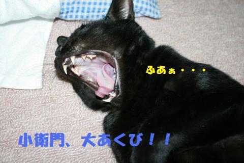 027_convert_20110202201215.jpg