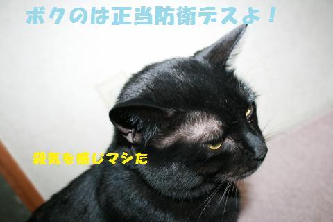 027_convert_20110208191834.jpg