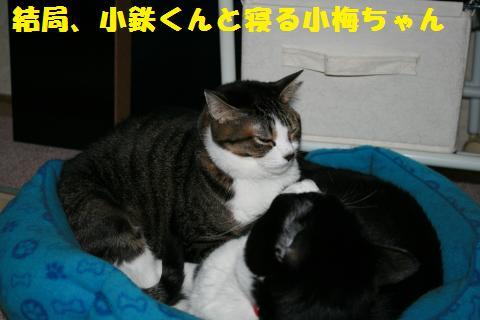 027_convert_20110329230932.jpg